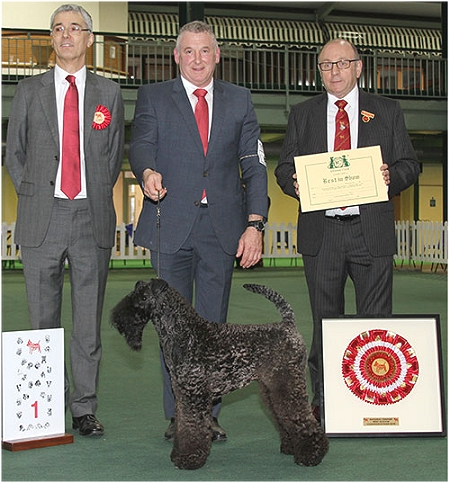 BIS National Terrier TASSELLI Mr R Balboa Nembo Kid