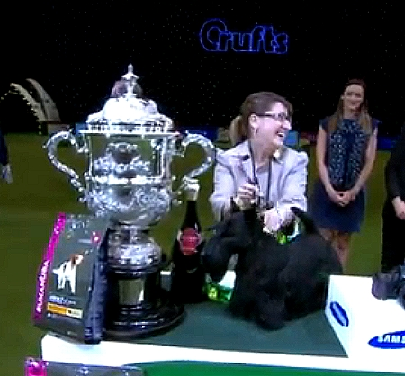 Crufts Best In Show Ch Mcvan's To Russia With Love