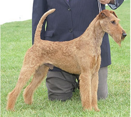 Terrier World - Lakeridge Cahal