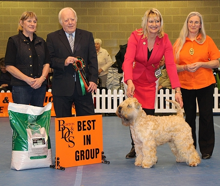 GROUP 1 CH JANEYJIMJAMS JENSON JW SHCM Breed: Soft Coated Wheaten Terrier