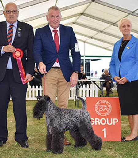 Max King Judge - Davies' Indian Princess at Perrisblu, Kery Blue Terrier