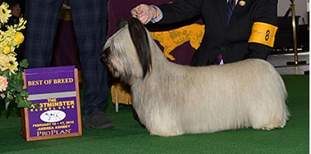 GCH Cragsmoor Good Time Charlie: Skye Terrier
