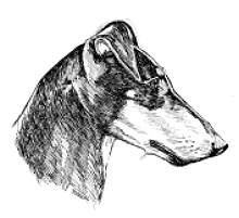 Manchester Terrier Breed Notes